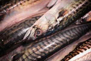 Oily fish for hair