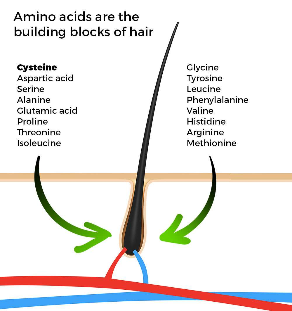 Amino acids for hair growth