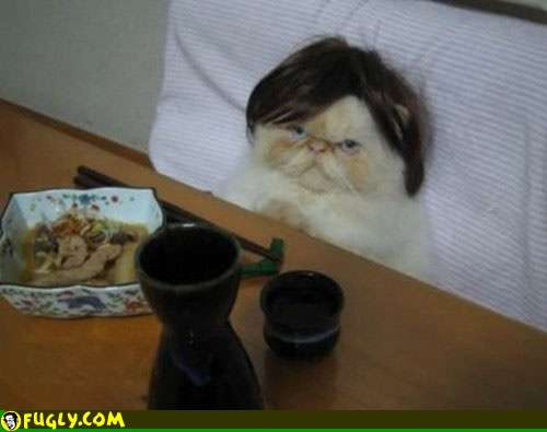 Cat wearing a wig in bed