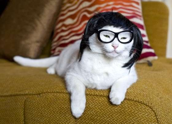 Chinese cat wearing wig and glasses