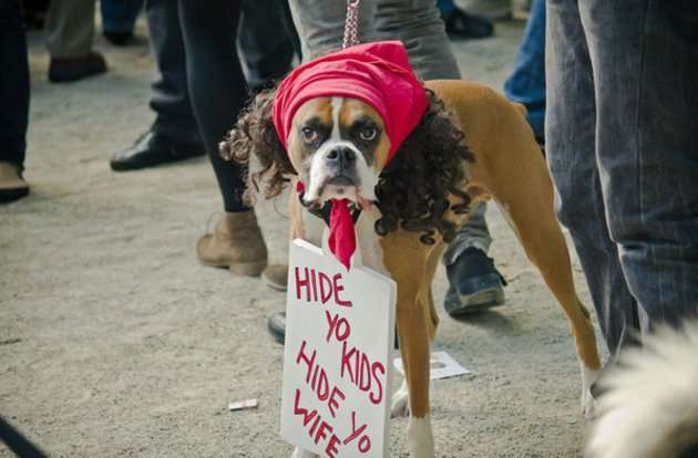 Dog with Wig Protesting
