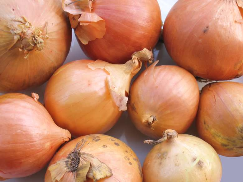 Onions source of quercitin