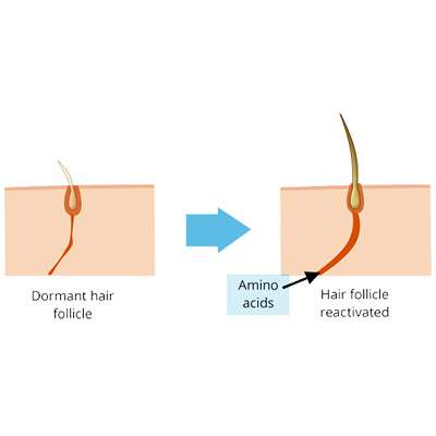 Amino acids reactivating hairt follicle
