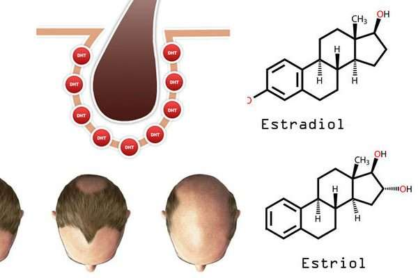 Estrogen hair loss
