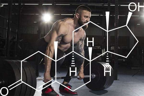 Weight lifting body building hair loss