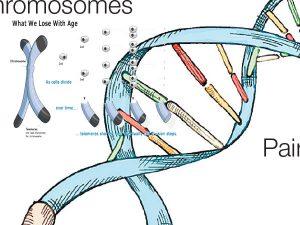 Telomeres hair loss